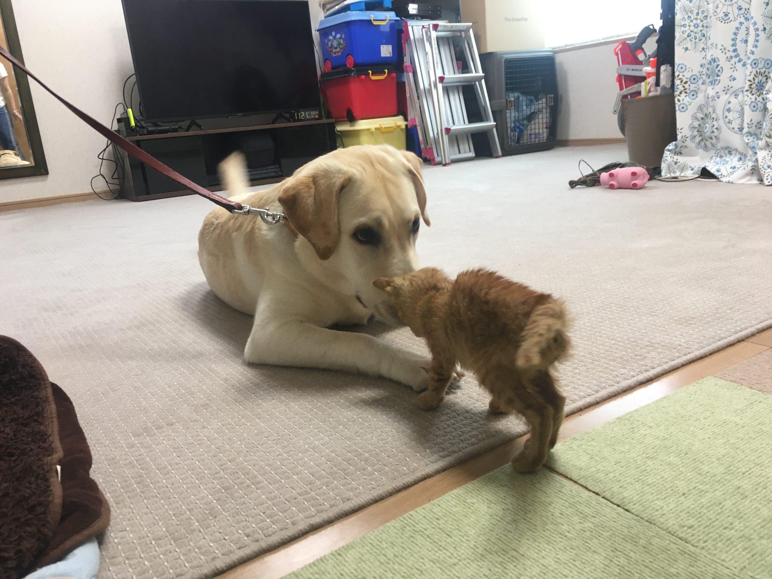 トレーニング犬と保護猫